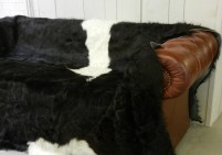 William - Belted Galloway Cow Hide